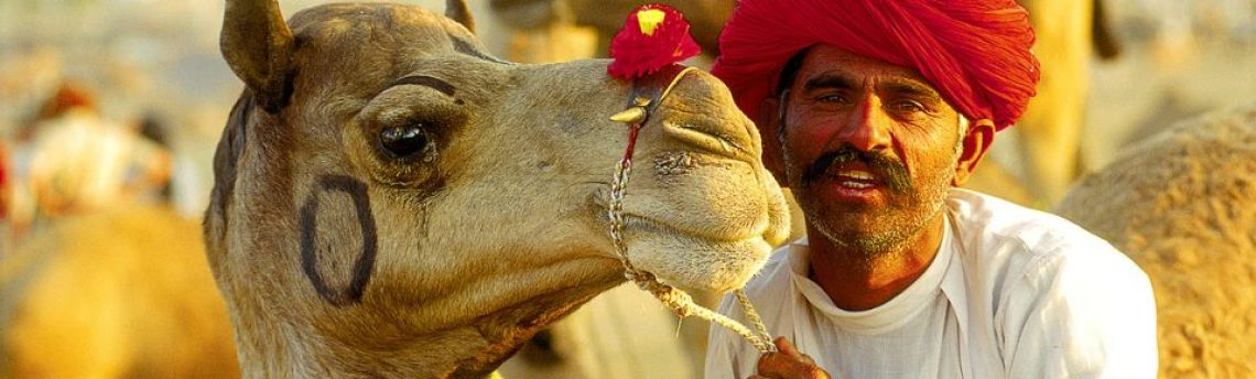 Rajasthan intensiv erleben. Variante 1