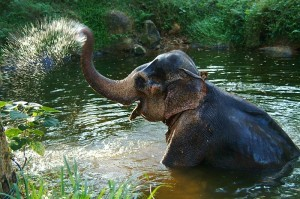 a_day_with_the_elephant_by_Daniel_Nadelbach 2