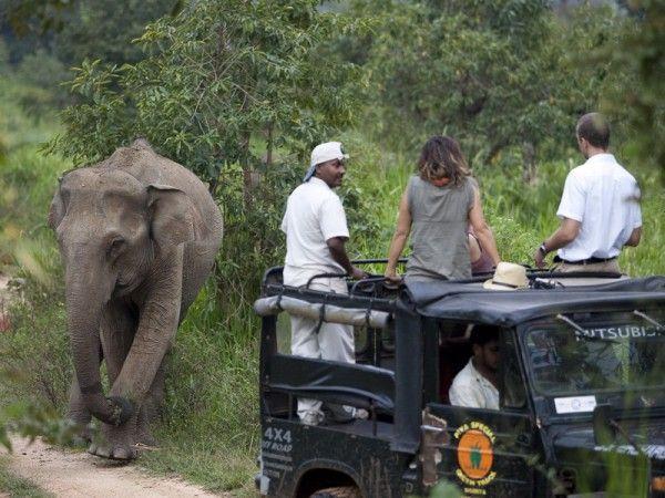 Höhepunkte von Sri Lanka Safari