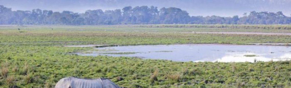 Assam: Kaziranga und gewelltes Land