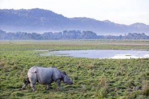 Wildes Assam & Kaziranga