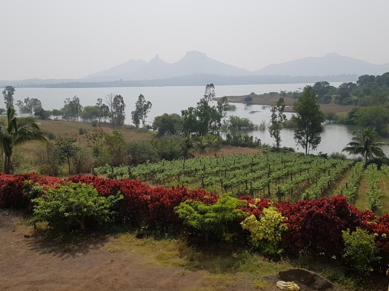 Nashik Weinanbaugebiet Vallonne Winzerei