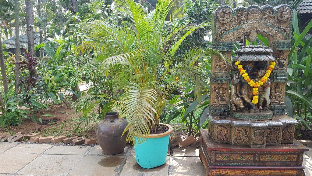 Yoga in Goa Leela Cottages in Ashwem