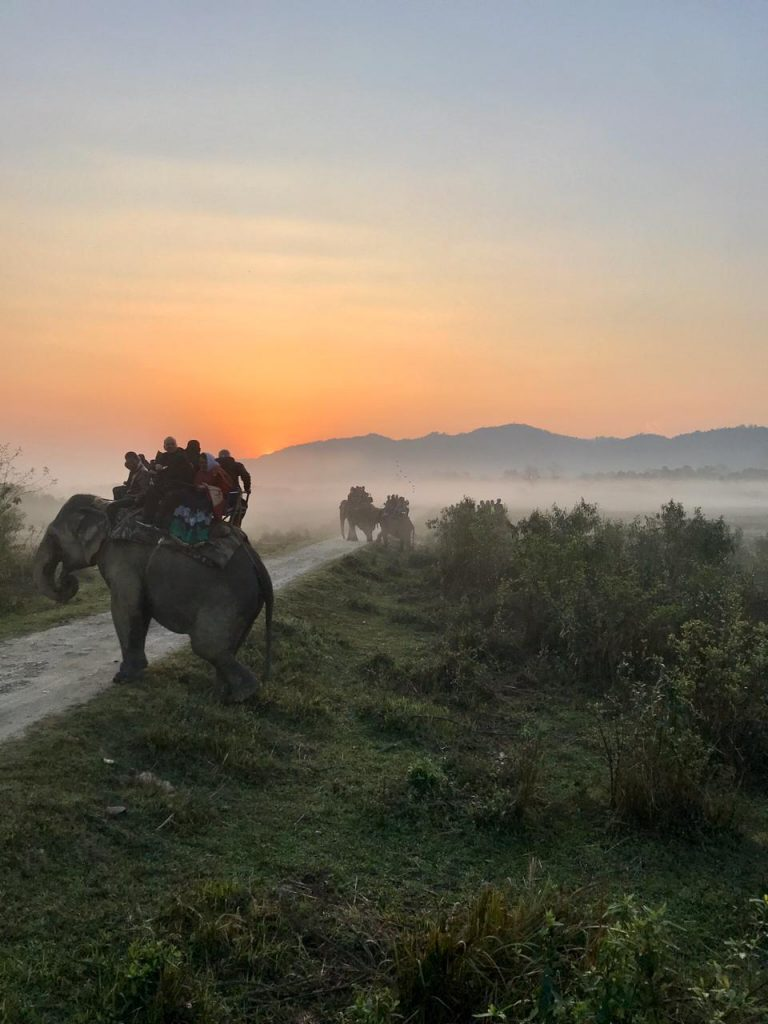 Wildes Assam und Kaziranga