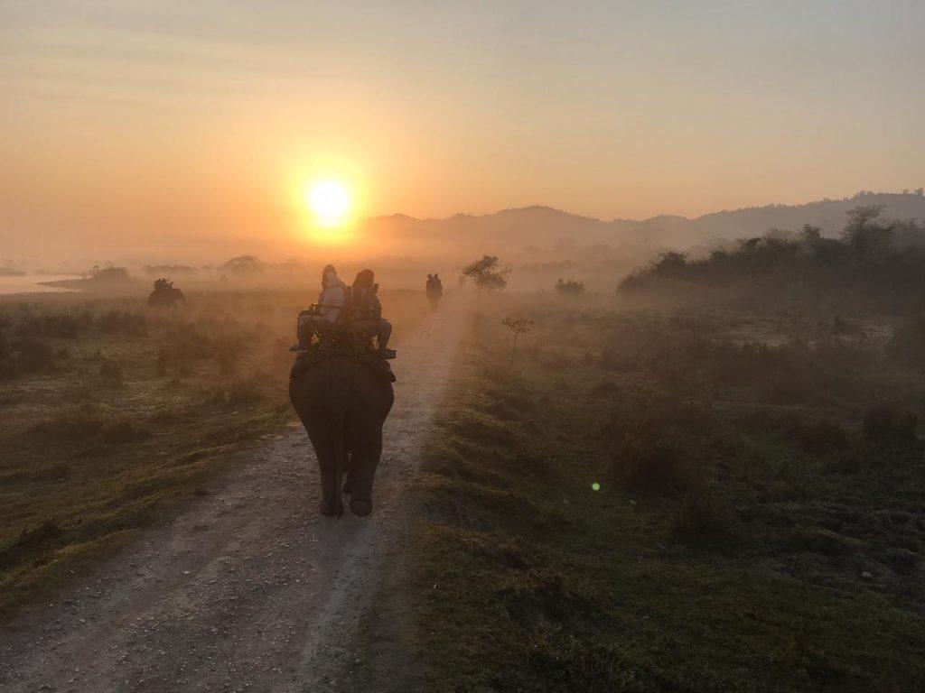 Safari Kazirangha Morgens