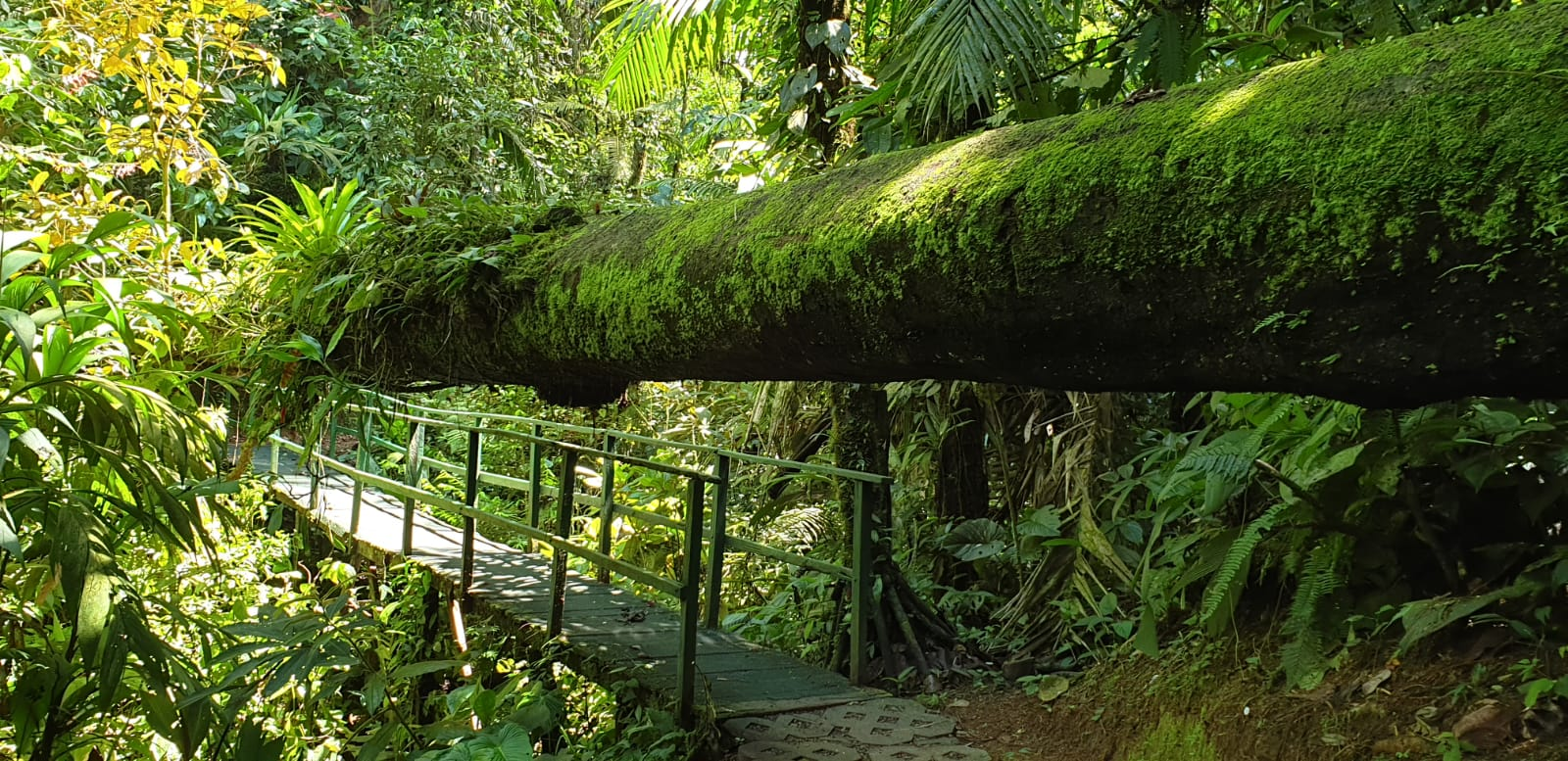 Tortuguero – Costa Rica Rundreise